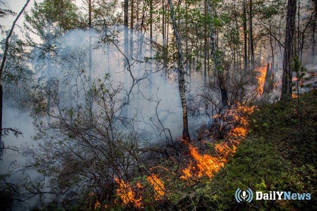Карелия понесла большие убытки за 2018 год благодаря лесным пожарам