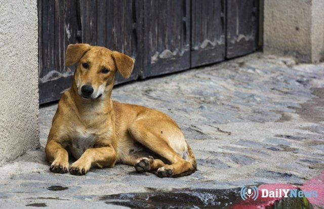 В Пятигорске вступили в силу новые правила контроля над бездомными собаками