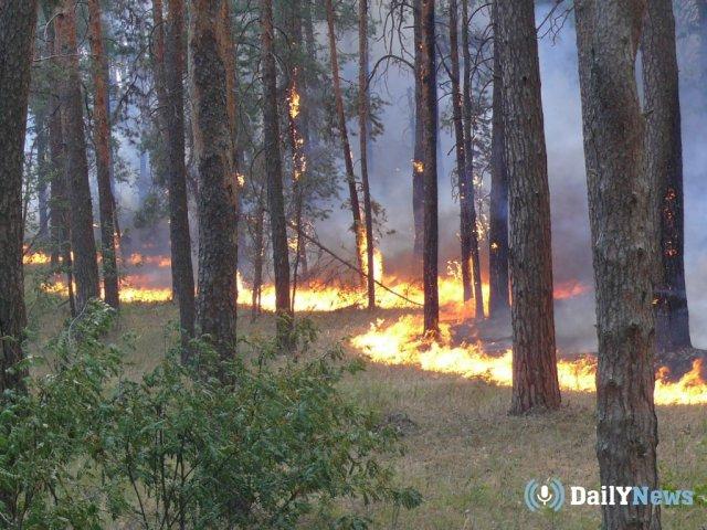 Пожар произошел в заповеднике в Тамбовской области