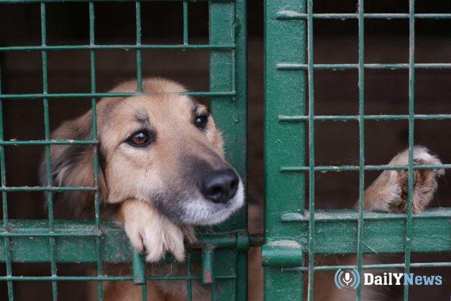 Новые питомники для бездомных животных откроются в Ставропольском крае