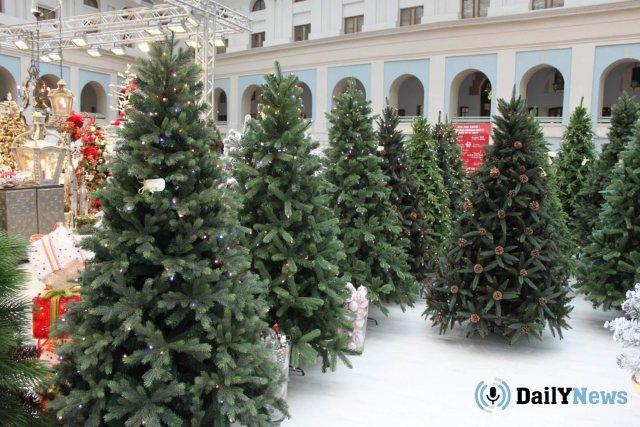 В Санкт-Петербурге появятся дополнительные елочные базары