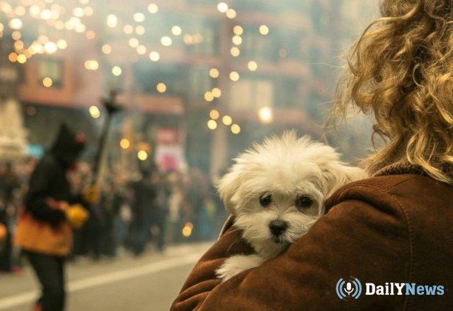 Кинологи попросили россиян быть внимательнее к своим питомцам во время новогодних фейерверков