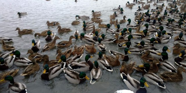 Акция по подсчету птиц стартовала в Орле
