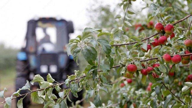 Развитием садоводства в Ставрополе займутся совместно со специалистами из Германии