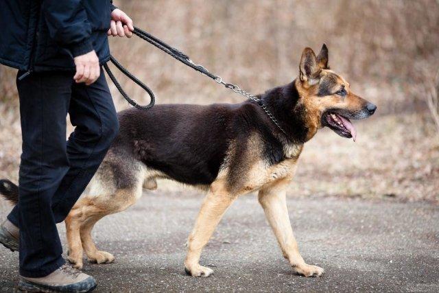 Жители Керчи пожаловались на собаку, покусавшую ребёнка