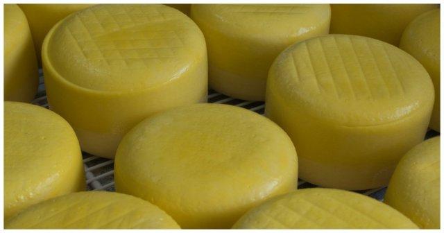 Крупная партия европейского сыра была уничтожена в Санкт-Петербурге