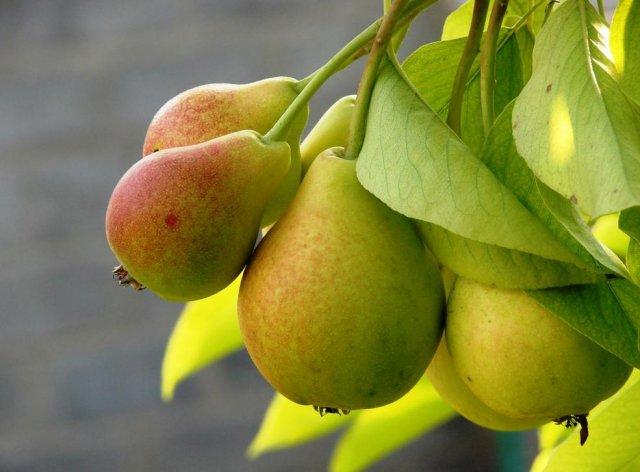 Эндокринолог рассказал о том, какие фрукты могут привести к проблемам со здоровьем печени