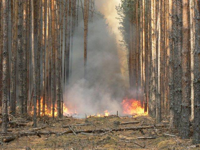 Житель Омской области, по чьей вине произошёл пожар, выплатит штраф