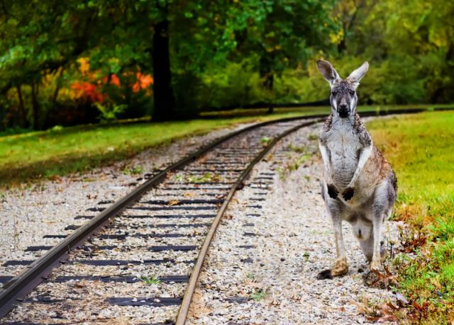 Из-за диких животных на западе Франции пришлось изменить график движения поездов