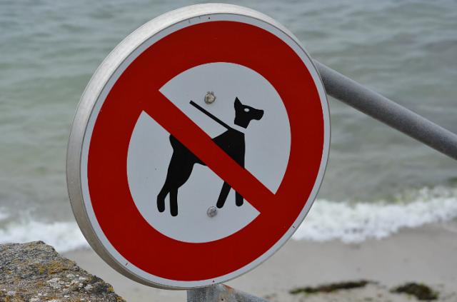 В России с 2021 будет введён запрет на посещение пляжей с животными
