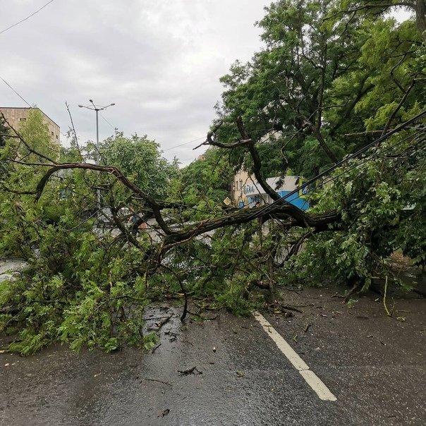 Жительница Свердловской области скончалась после падения дерева